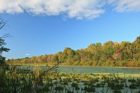 Vosburgh Swamp