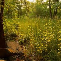 Franny Reese State Park Inholding