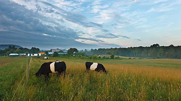 Pleroma Farm