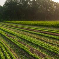 Taliaferro Farm