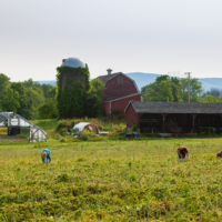 Thompson Finch Farm