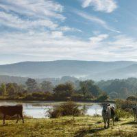 Artemis Farm
