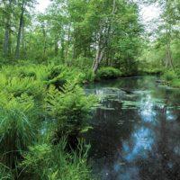 Burroughs Black Creek