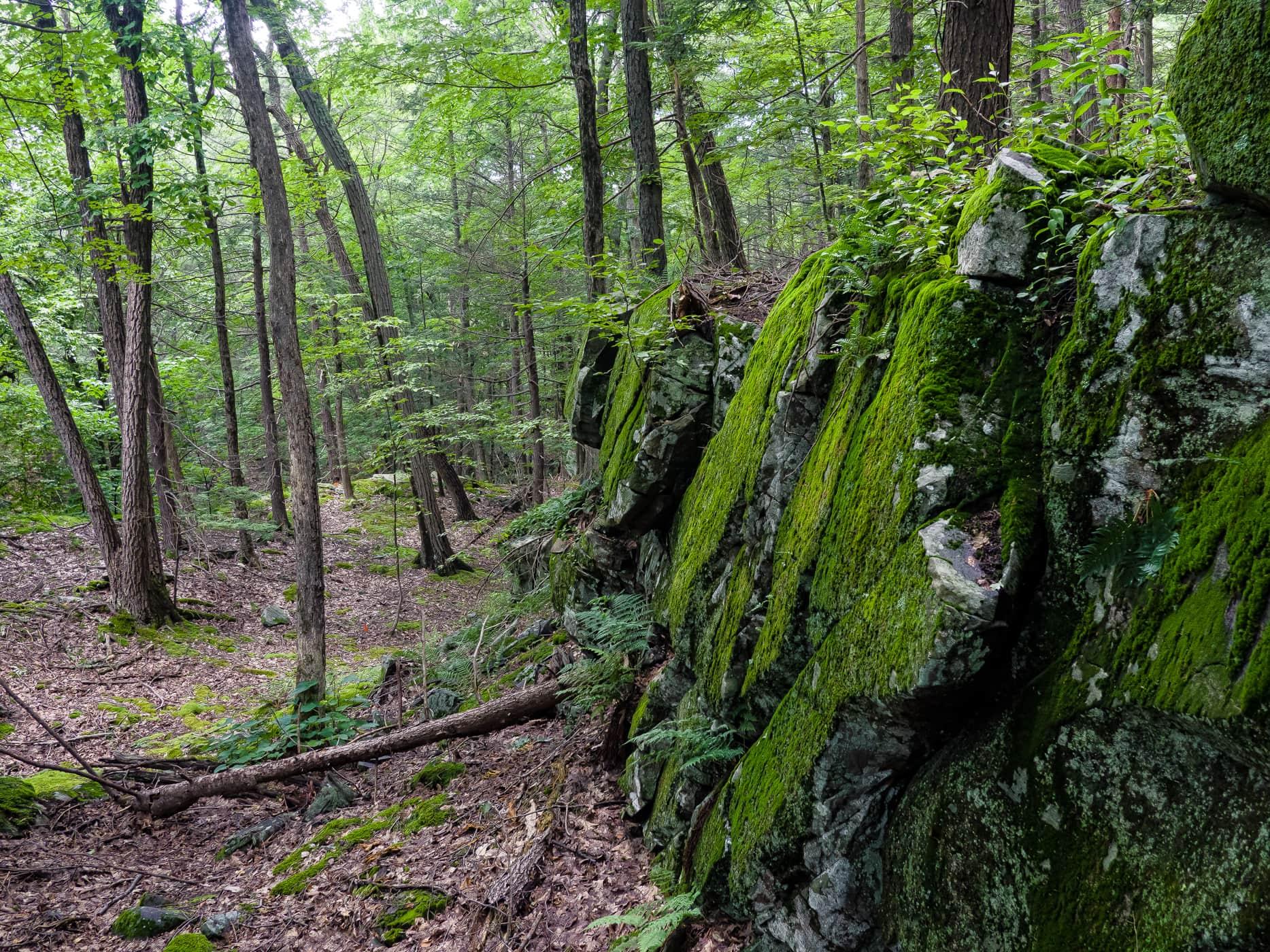 John Burroughs Trail