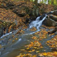 Falling Waters Preserve