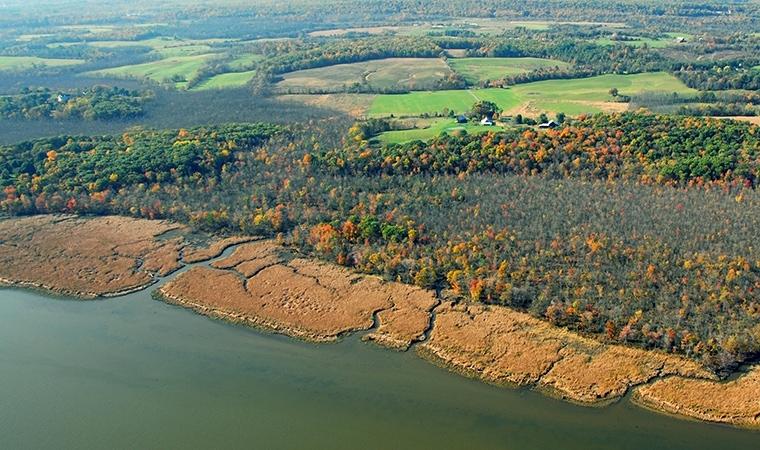 Ramshorn Marsh