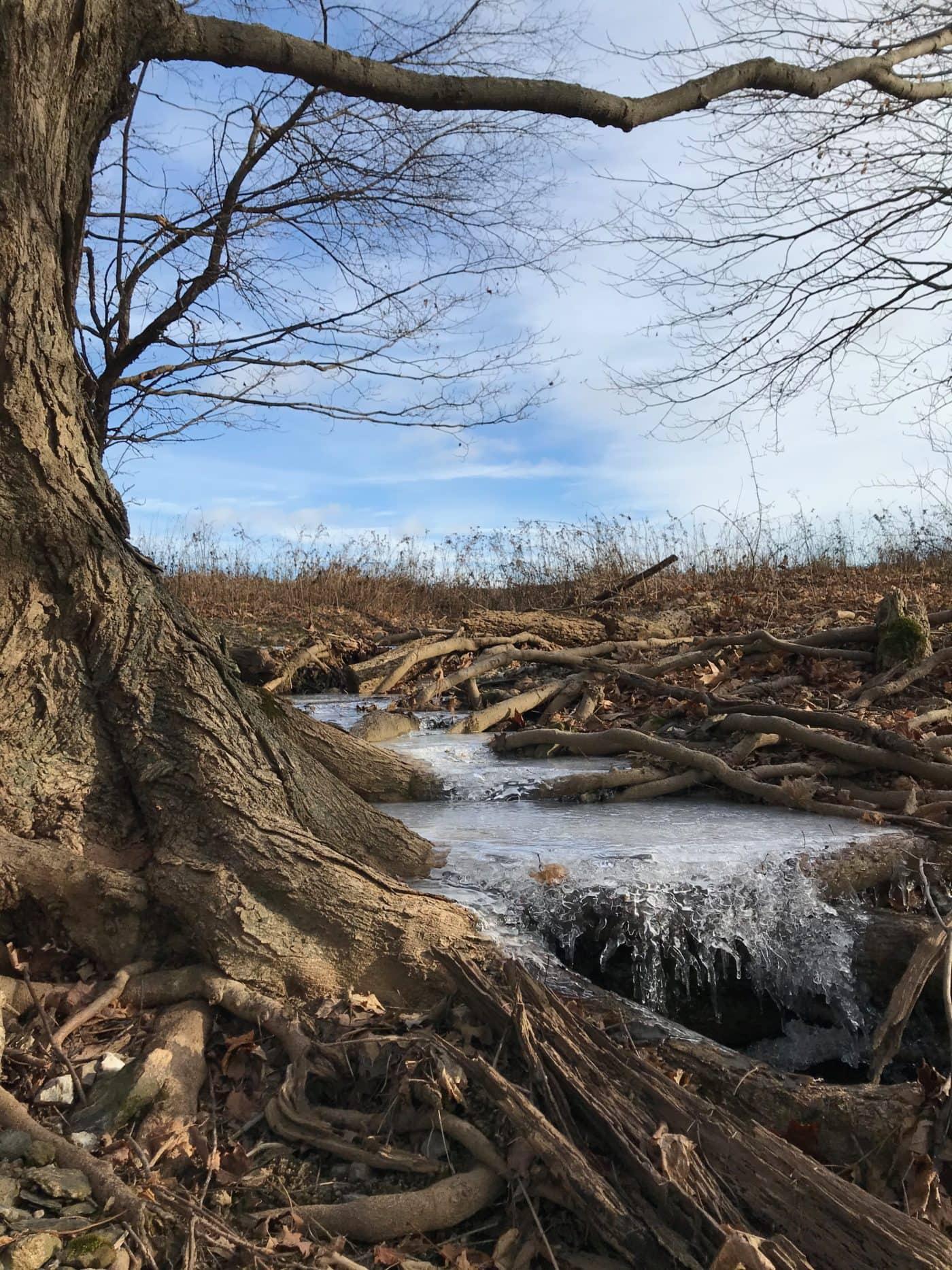 Overmountain Conservation Area