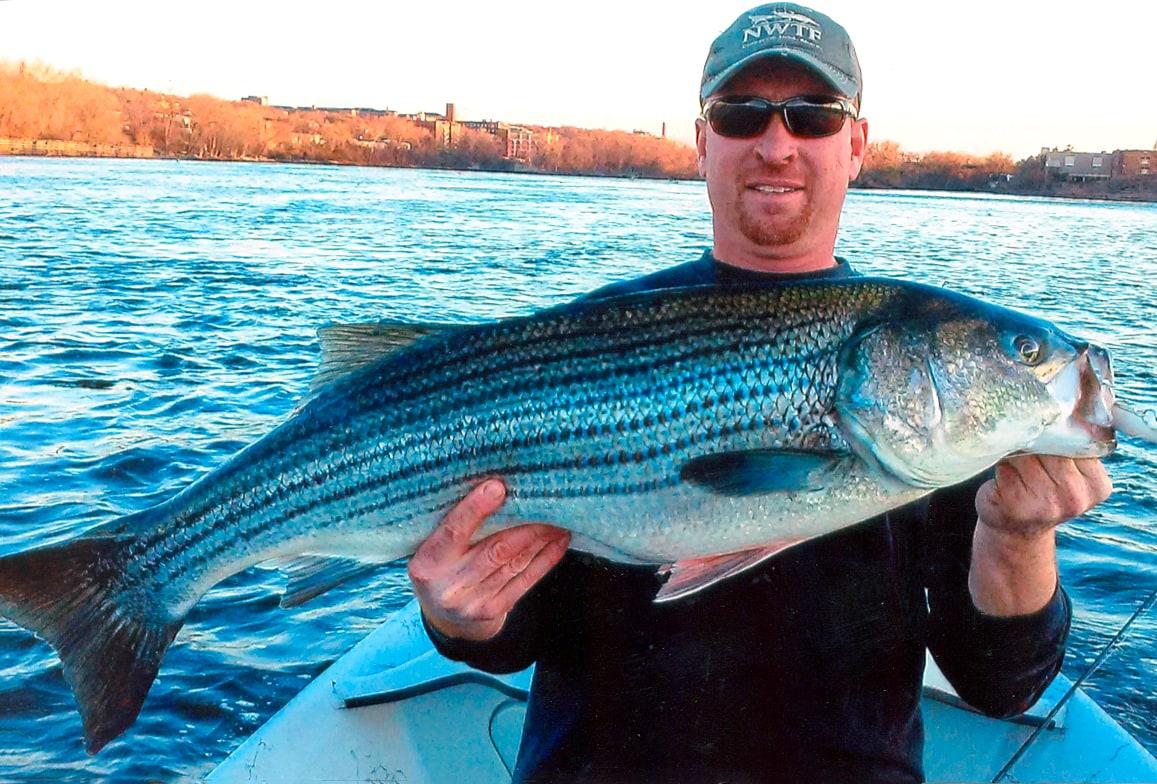 "38"" Striped Bass caught by Jason Hamilton"
