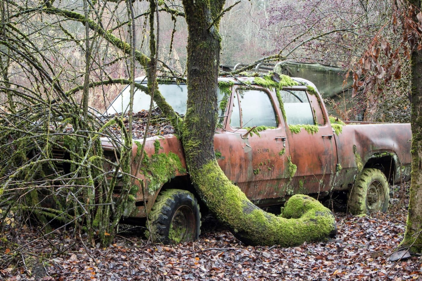 Tree Around Car