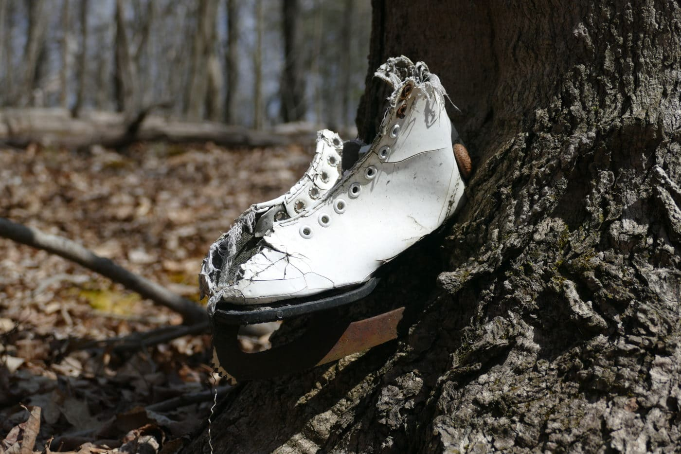 Ice Skate in Tree