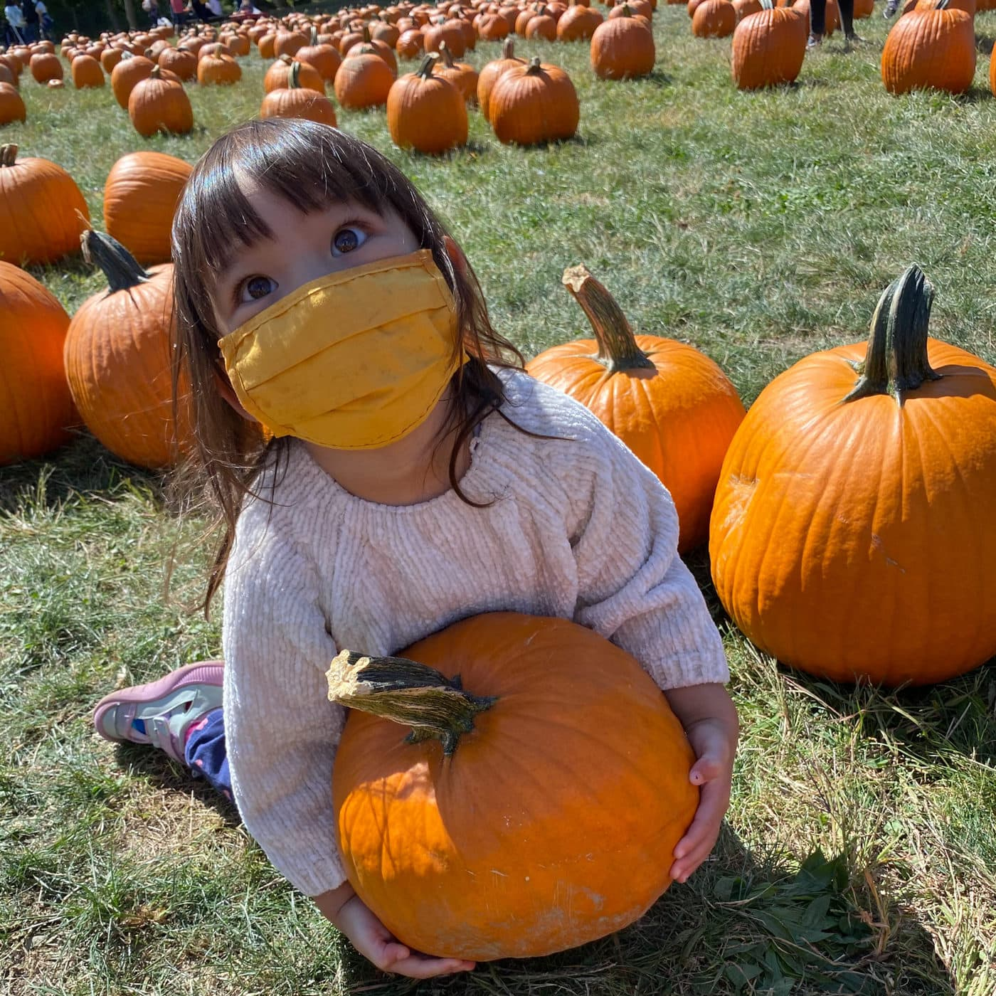 Pumpkin Patch at Dubois Farms